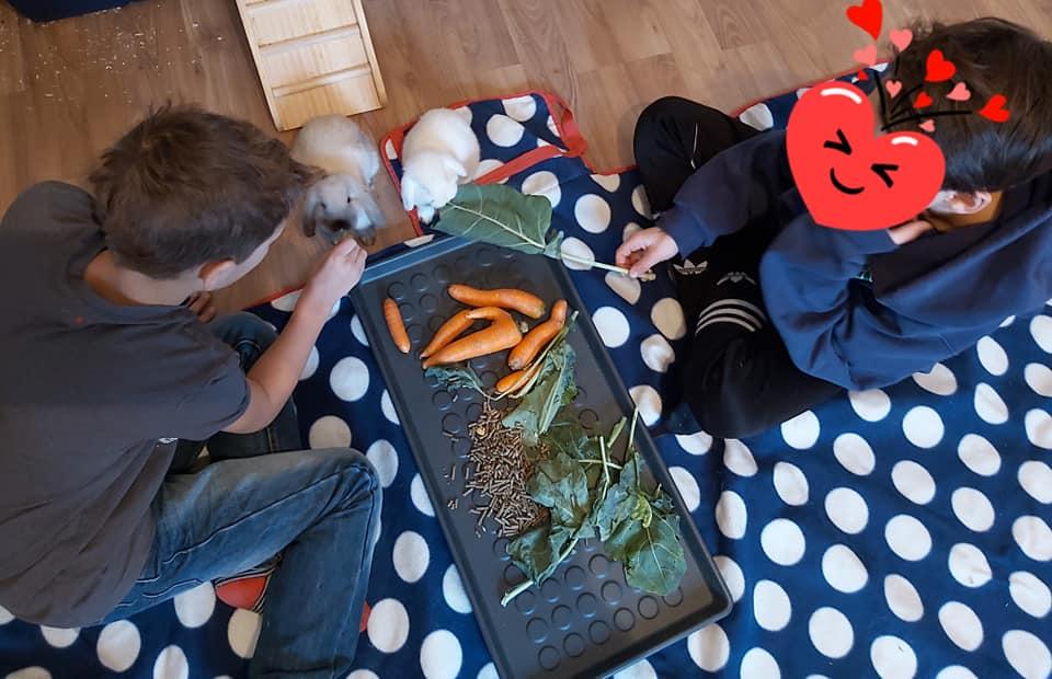Kinder-Erlebnis-Bauernhof Wals   Tiere hautnah   Vielfältigkeit und Dankbarkeit